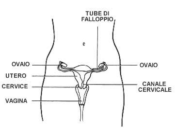 Speciale: il desiderio di maternità