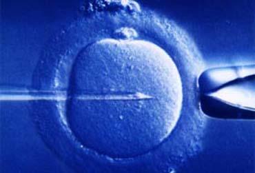 Inserimento dello spermatozoo nell'ovocita