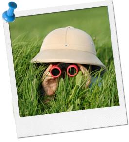 animal_safari_hat