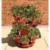 coltivare-orto_-in_-balcone-fragole