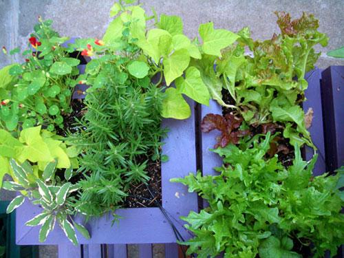 Giardinaggio trendy ed ecosostenibile l 39 orto sul balcone for Orto sul balcone