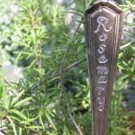 giardinaggio-garden-markers-rosmarino