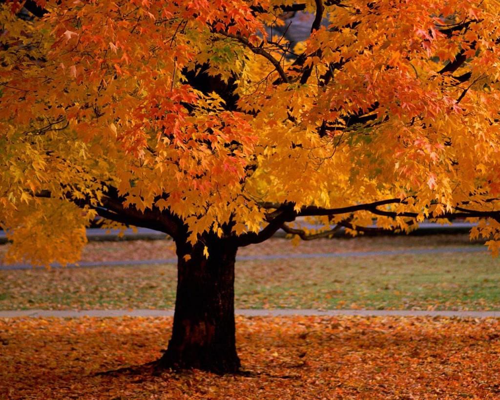 attivita-autunno-foglie
