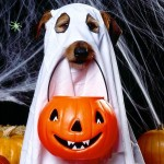 halloween-costumi-cane_