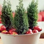 decorazioni-natale-albero-pini