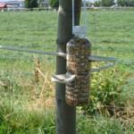 attivita-con-i-bambini-birdgardening-bottiglia