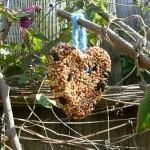 attivita-con-i-bambini-semi-uccelli-birdgardening