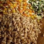cibo-e-bambini-cereali
