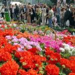 pasquetta-2011-milano-mercato-fiori