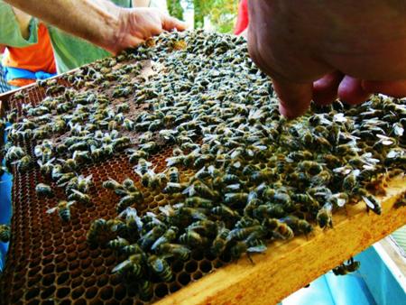api_apicoltura_Belfort