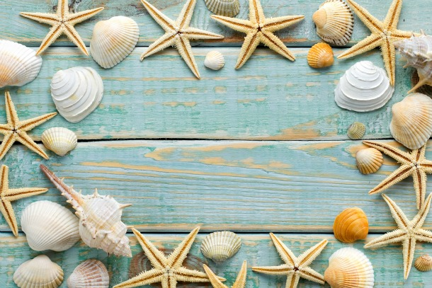 Sea shells frame on vintage shabby wood
