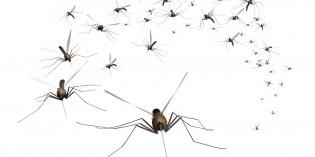 Chi viene punto dalle zanzare?