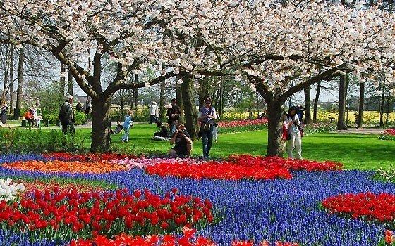 Visitare l'Olanda in primavera