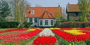 Scoprire l'Olanda in primavera