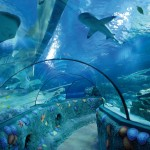 Gardaland SEA LIFE Aquarium  (1)