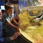Gardaland SEA LIFE Aquarium_Paradiso delle Tartarughe (2)