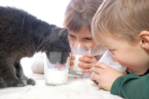 Cura degli animali domestici