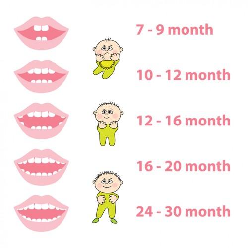 primi dentini omeopatia