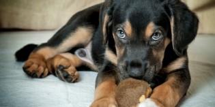 Come gestire un cucciolo quando si va al lavoro?