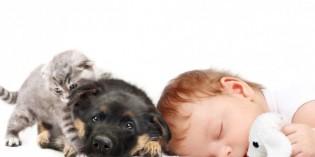 Gelosia di cane e gatto verso il neonato. Come gestirla?