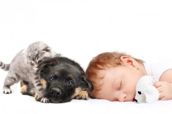 gelosia di cane e gatto verso il neonato