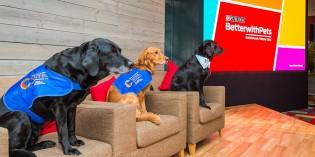 """Il forum """"Better with pets"""" di Purina, per promuovere la relazione pet e uomini"""