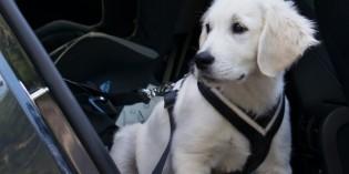 Viaggiare con gli animali: auto, nave aereo