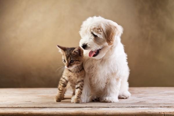 cane gatto carta d' identità