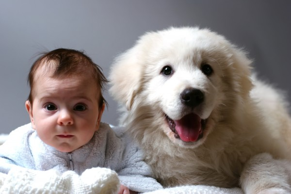 convivenza bambini animali