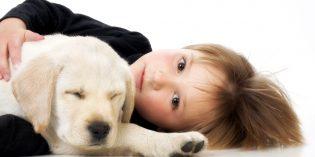 Animali domestici in famiglia, istruzioni per l'uso – VIDEO