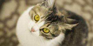 Un milione di pasti per cani e gatti trovatelli: è l'obiettivo di Friskies