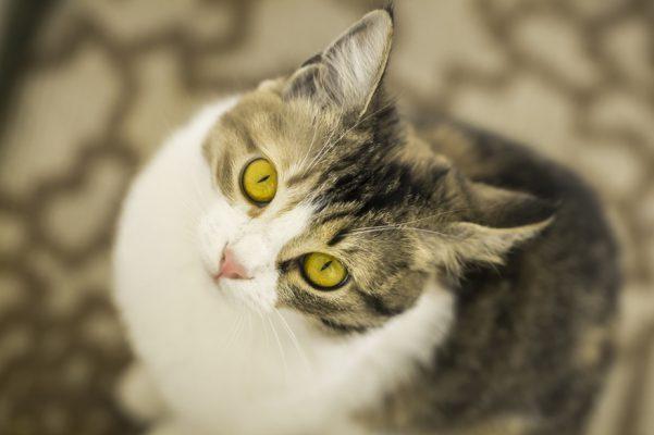 un milione di pasti per cani e gatti Friskies