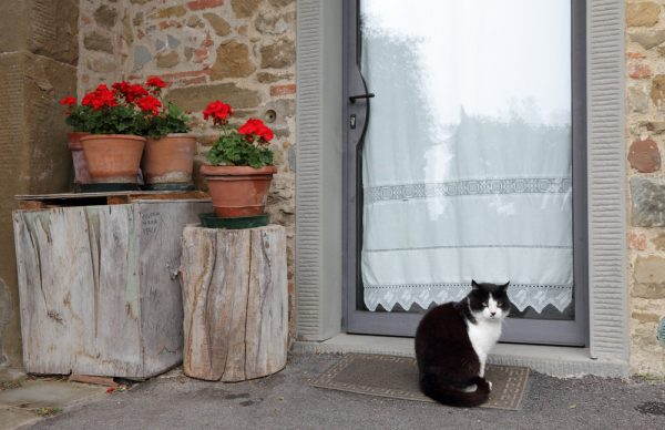 cani e gatti trovatelli pasti Friskies