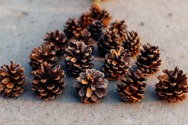 Pigne profumate fai da te per lavoretti di natale o - Decorazioni natalizie con le pigne ...