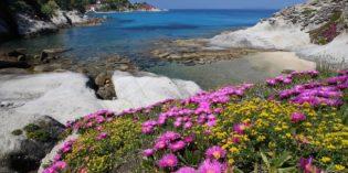 Dove andare per una vacanza in anticipo? All'Isola d'Elba