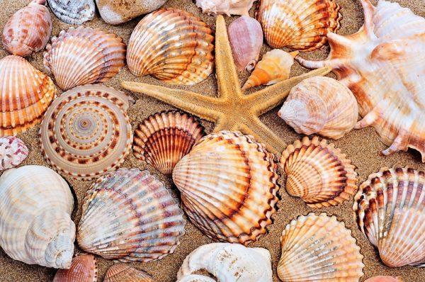 conchiglie in spiaggia