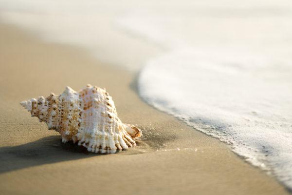 conchiglia in spiaggia