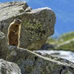 Vacanze in Trentino con la famiglia_ Val Rendena - Val Nambrone - Pian d'Amola - Fototeca Trentino Sviluppo S.p.A. - FOTO DI Marco Simonini
