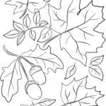 Disegni dell'autunno da colorare e stampare gratis _ foglie e ghiande