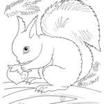 Disegni dell'autunno da colorare e stampare gratis _ scoiattolo