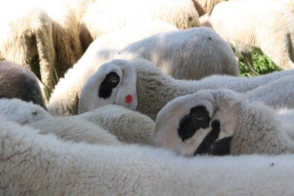 terme di comano filiera lana