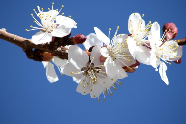 inviti del battesimo immagini da stampare: fiori bianchi