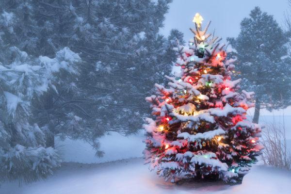 storie di Natale leggenda dell'albero di Natale