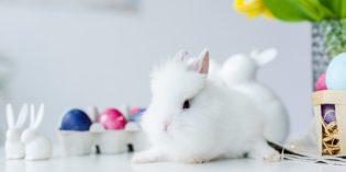 Come fare un coniglietto di Pasqua con calzine spaiate