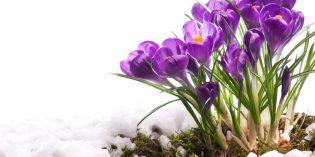 Poesie e filastrocche sulla primavera, anche in inglese