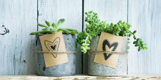 Bomboniere con le piante grasse per prima comunione e altre cerimonie