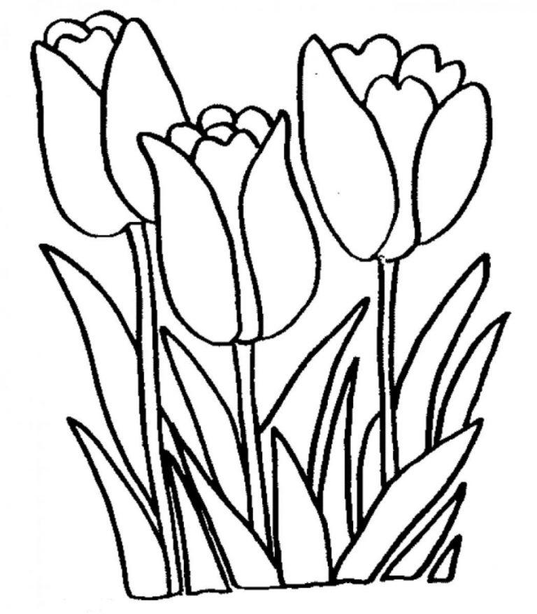 fiori da colorare tulipani