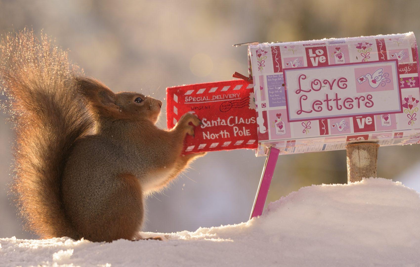 Cassetta postale di Babbo Natale e scoiattolo
