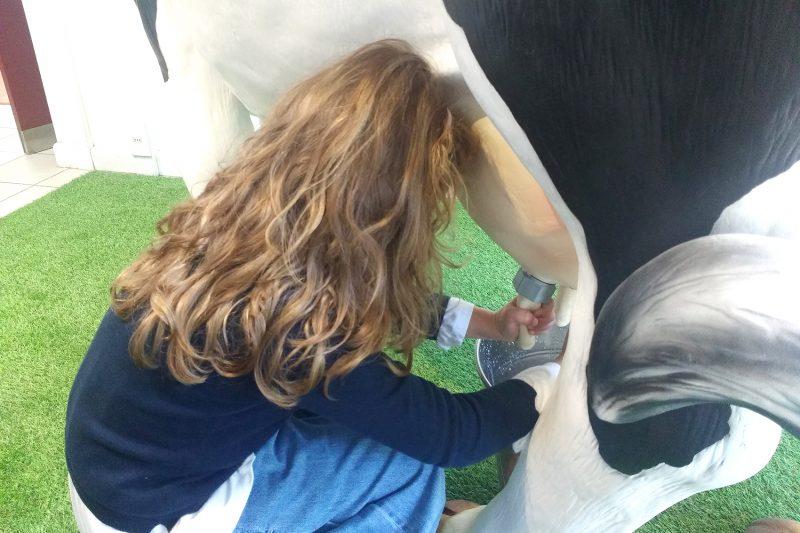come nasce la certosa galbani _ bambina che munge una mucca