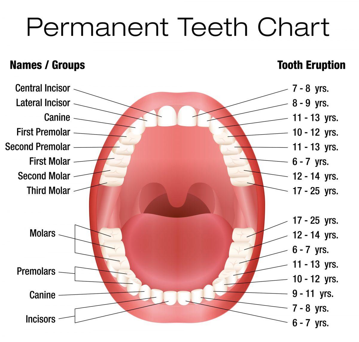 Denti permanenti